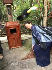Toucan flying at my head