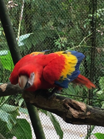 Agitated macaw