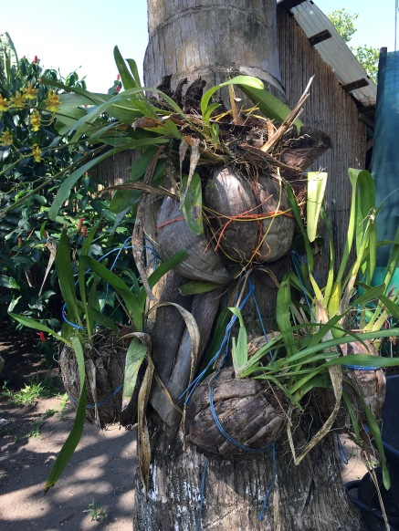 Coconut planters
