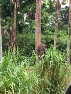 sample safari sighting